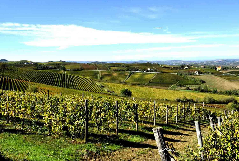 vino-bianco-piemontese-2